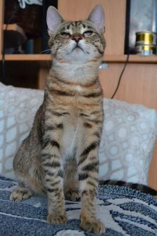 юний красотунчик котичок