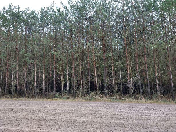 Sprzedam las sosnowo brzozowy
