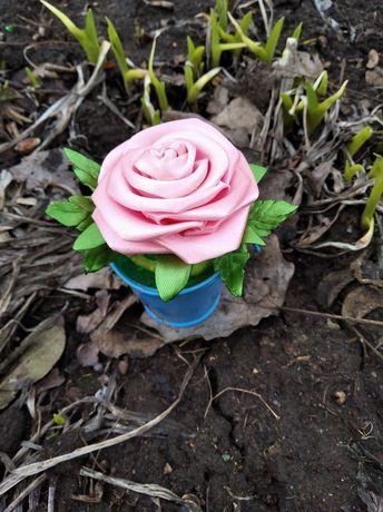 Подснежники розы