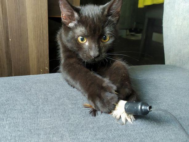 Срочно, отдам котёнка!!! Черная пантера