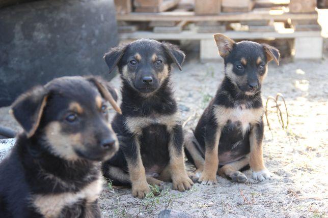 Помогите найти дом щенкам. 4 девочки и 3 мальчика