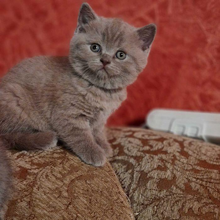 Котята лиловые плюшевые Димитров - изображение 1