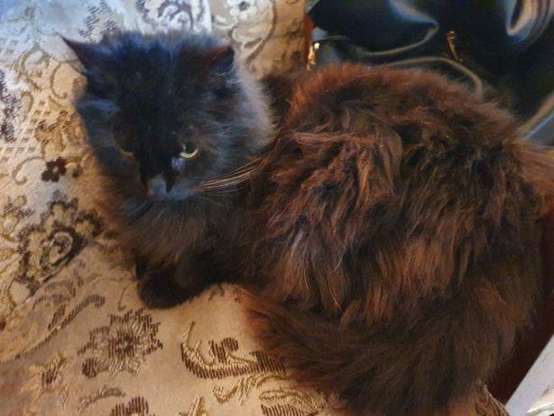Kotka Syberyjska