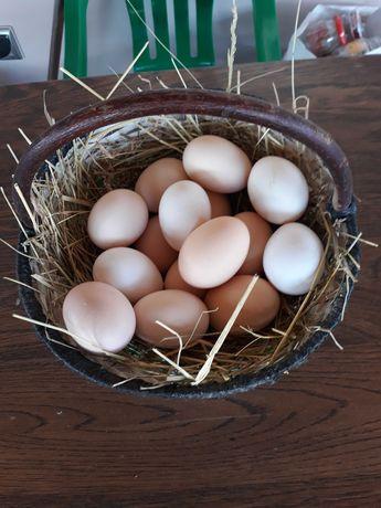 Jajka wiejskie!!!