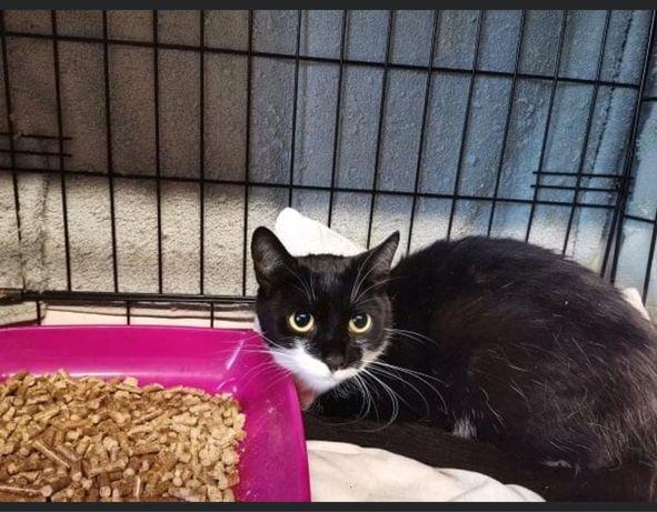 Znaleziono czarno białą kotkę
