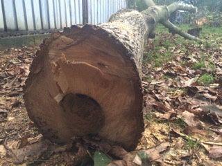 Sprzedam drewno z orzecha