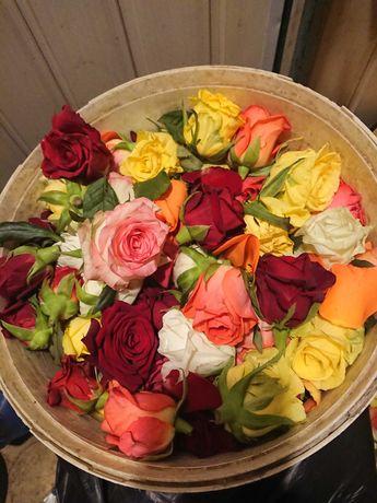 Лепестки роз бутоны