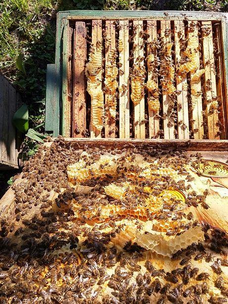 Odkłady pszczele, rodziny pszczele Łódź, zgierz, tomaszów, kraków