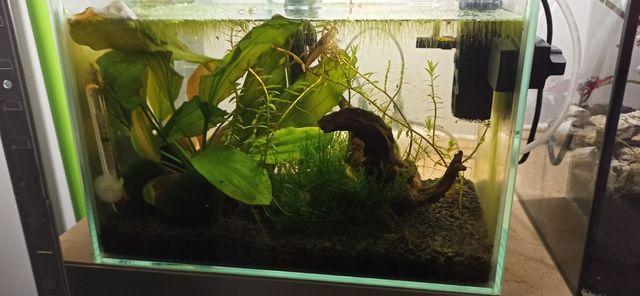 Akwarium + rośliny + osprzęt