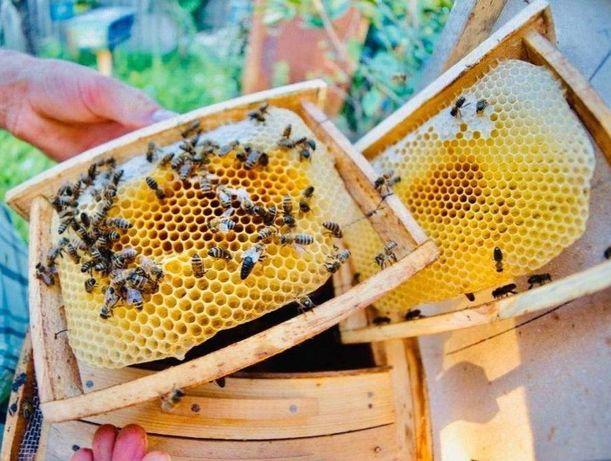 Пчелопакет Степова-ус Привезу в Донецк! Сильные пчелы!