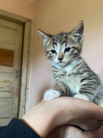 MACZEK kotek do adopcji /BARLINEK