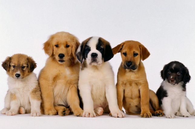 Посредник по продаже собак!