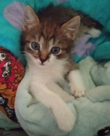 Кошеня дівчинка.