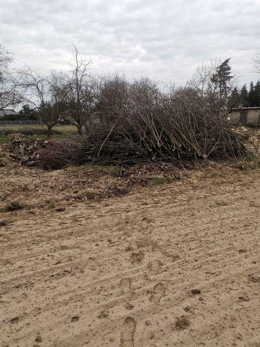 Oddam za darmo gałęzie na biomase Mianowice - image 1