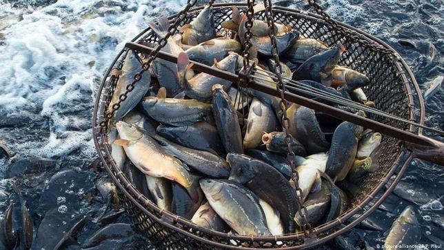Вылов рыбы,выкуп рыбы!