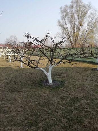 Обрізка дерев!!!