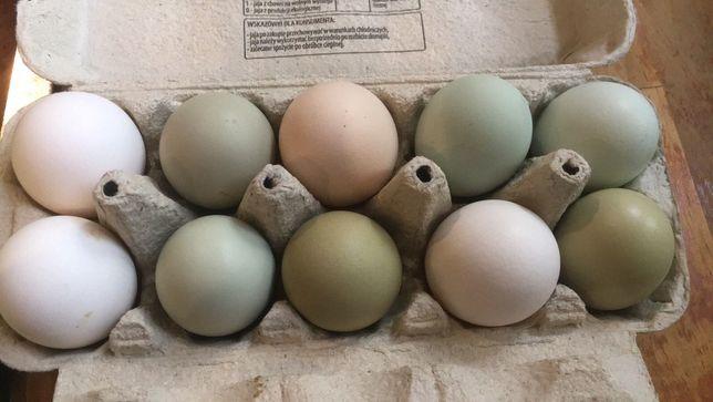 Jajka ekologiczne od kur wiejskich