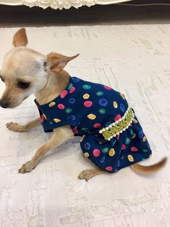 Платье для собаки.