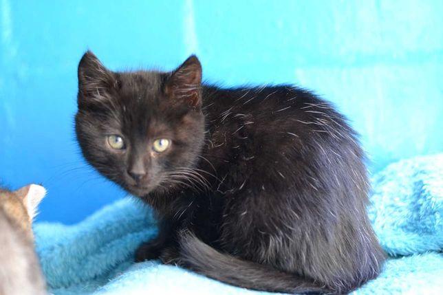 котичок мілашик в чорній шубці 1,5м