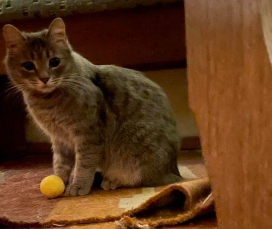 Ксюшенька, миниатюрная кошка-норушка