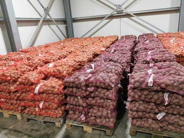 Ziemniaki drobne i jadalne