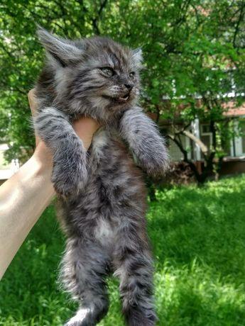 Отдам пушистого котенка девочку