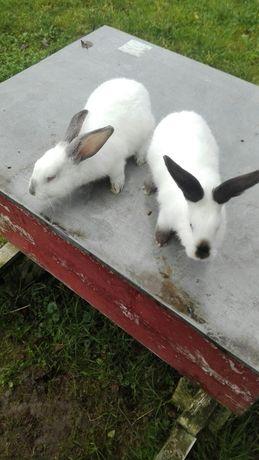 Кролики кролі