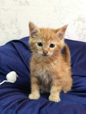 Котята от 2 месяцев