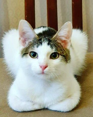 Самый добрый и милый котёнок, 4,5 мес, срочно нужен дом
