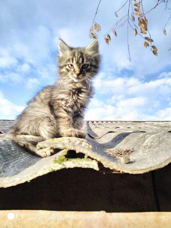 Маленькі котейочки