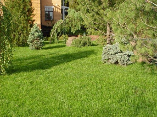 Газонная трава садовая НЕДОРОГО