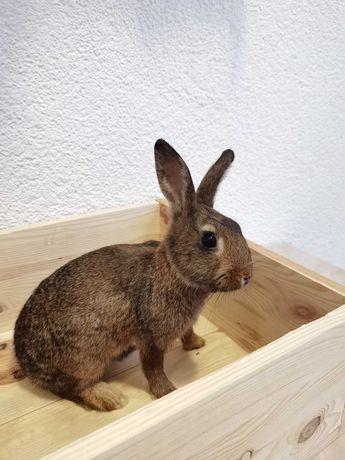 Голландские крольчата в поиске нового дома