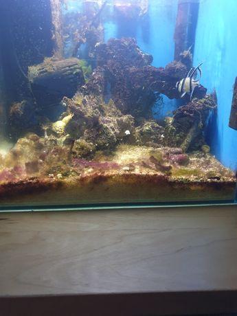 Dojrzałe akwarium morskie aquael