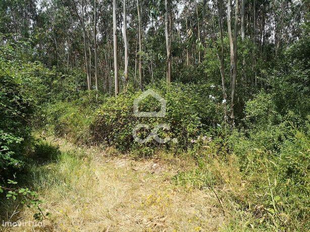 Terrenos Rústicos, localizados nos limites de Monfirre-Concelho de Maf