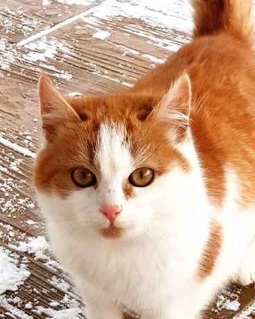 Отдам рыже-белого котенка ,девочка , 6 месяцев