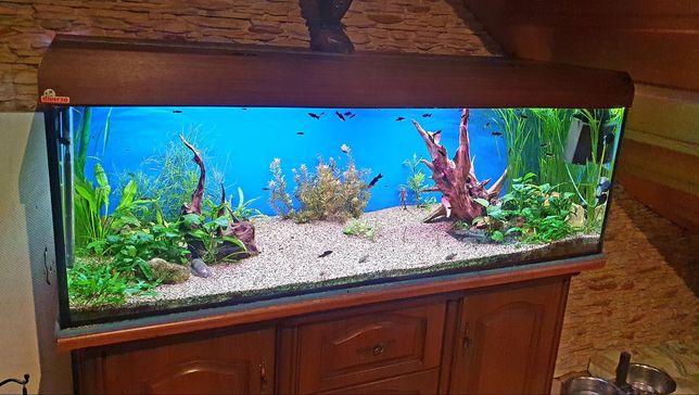 Akwarium z wyposażeniem 375L