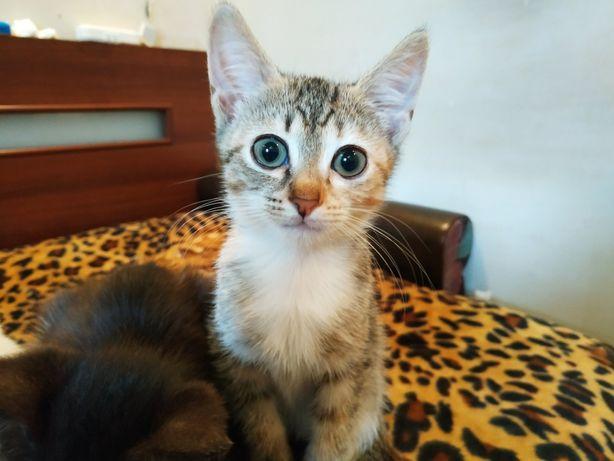 Кошечка Лиза в заботливые руки!