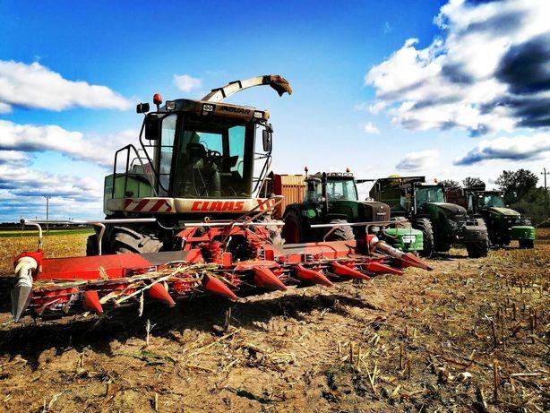 Zbiór kukurydzy na kiszonke AgriMax Kukurydza l koszenie l ubijanie l