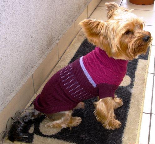 Piękny dzianinowy sweterek dla psa