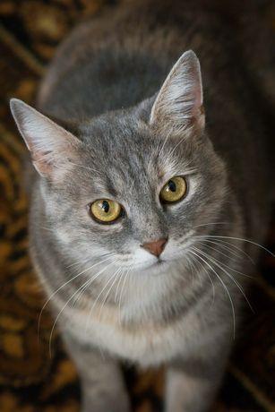 Альфа, 1,5 года, кошка, красивая кошка