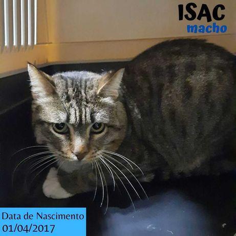 Gato Para Adoção (Isac)