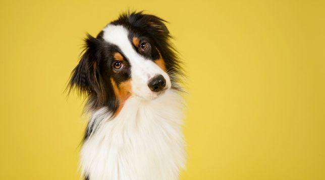 Выезд врача на дом, консультация онлайн ветеринар