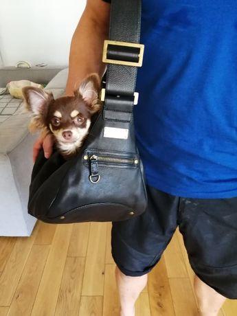 Torba nosidełko transporter dla pieska york chihuahua ratlerek