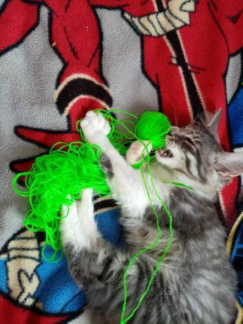 Котик пухнастий антистрес