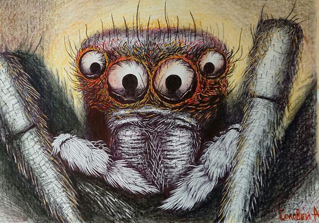Картина графика паук 30*40