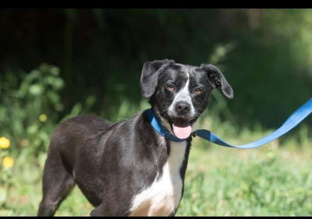 Brenda- cachorra de porte médio para adoção