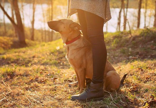 Кинолог, зоопсихолог ( дрессировка и воспитание собак )