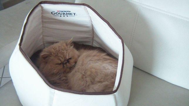 Cama GOURMET que gatos adoram