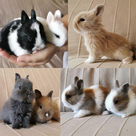 Gaiola nova + coelhos anões mini + alimentação adequada