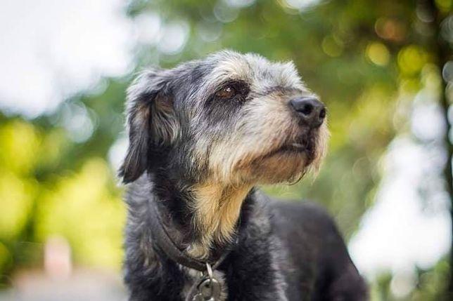Jowisz - 15 lat psiego bólu, samotności i smutku